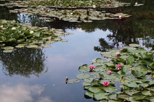 giverny jardins monet