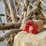 zoo de paris à noel enrichissement