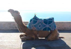 voyage au maroc - agadir conseils et bonnes adresse, itinéraires, nomad attitude agence voyage